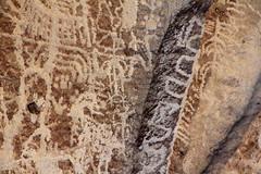 Petroglyphs (Walt Barnes) Tags: whiterivernatlregisterdistrict nativeamerican petroglyph carving rock stone boulder moutain desert petroglyphcarving ancient canon eos 60d eos60d canoneos60d wdbones99 wdbones rocks boulders nevada petroglyphs