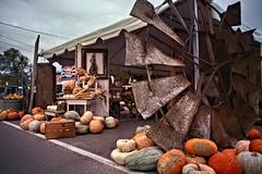 (Light Echoes) Tags: summer antique sony september fleamarket wideanglelens 2019 a7ii springfieldantiqueshowfleamarket pumpkins shed gourd windmill blades
