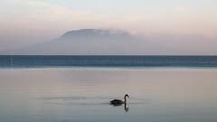 (zedspics) Tags: balaton magyarország hungary hongarije zedspics zen badacsony 1910 nature morning swan balatonfenyves minimal minimalism