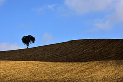 Lonely tree (Fabio Polimadei) Tags: tree hill field landscape lightandshadows silhouette countryside minimalism minimal