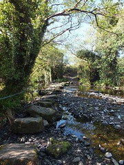 Step by step (Vicki.94) Tags: ireland irland dingleway peninsula wandern hiking nature natur steine stones stream bach wasser water kerry tress bäume