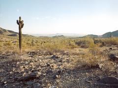 Cactus at South Mountain Park and Preserve (Boris Capman) Tags: 645 phoenix arizona landscape scenery nature outside outdoor desert cactus usa roadtrip backpacking mediumformat bronica etrs kodak portra160 wanderlust filmisnotdead filmphotography analog argentique