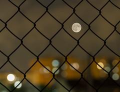 Enjaulado a la luz de la luna... (José Ferrando) Tags: lunallena lunallenaoctubre2019 valencia otoño2019 noche nocturnas