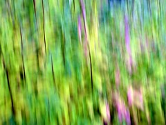 Intentional Camera Movement 2 ((Sue Lockhart Images)) Tags: icm intentionalcameramovement abstract green yellow ngysaex