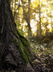En nature (Thaurin Geoffrey Photographie) Tags: france ariège promenade nature landscape foret forest bois arbre tree color sun sunlight sunset feuille morte paysage bokeh stacking sony a7ii 50mm lightroom photoshop check love natural