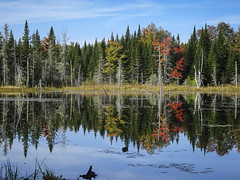 L'automne arrive. (Olivier Rapin) Tags: 2019 canada quebec vacances automne lac reflet sony