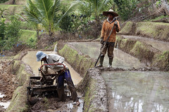 Hard Workers (Travel Marco) Tags: indonesia bali asia nature worker travel unesco unescoworldheritage life portrait people world jatiluwih rice riceterraces