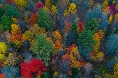 Elevated POV of the foliage (LEXPIX_) Tags: autumn fall foliage leaves tree colors scene image shot aerial birds eye trees forest woods color drone dji mavic2pro rural countryside lexpix