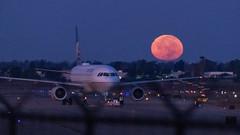 United A320 and the Moon (beltz6) Tags: n427ua moon fullmoon moonset huntersmoon sba ksab flysba santabarbaraairport unitedairlines airbus airbusa320 a320 airplane aviation avgeek night morning twilight dawn airport