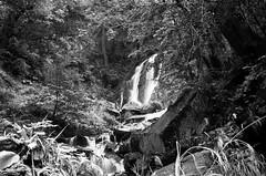 kp2019-38 (Vasily Ledovsky) Tags: sochi krasnaya polyana krasnodar krai voigtlander bessar canon ltm l39 m39 50mm 5018 f18 national park hiking