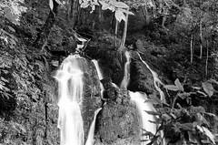 kp2019-36 (Vasily Ledovsky) Tags: sochi krasnaya polyana krasnodar krai voigtlander bessar canon ltm l39 m39 50mm 5018 f18 national park hiking