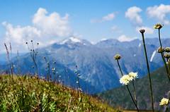 kp2019-4 (Vasily Ledovsky) Tags: sochi krasnaya polyana krasnodar krai voigtlander bessar canon ltm l39 m39 50mm 5018 f18 national park hiking