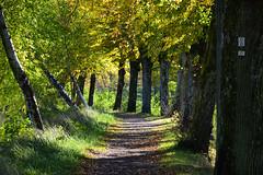 Le chemin des arbres (Excalibur67) Tags: nikon d750 sigma globalvision contemporary 100400f563dgoshsmc arbres trees automne autumn sentier chemin nature