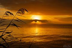 Gorgeous Sunrise (Johan Konz) Tags: golden glorious sunrise waterland markermeer netherlands water lake landscape waterscape nikon d7500 reed outdoor nature monochrome gorgeous elitegalleryaoi bestcapturesaoi aoi