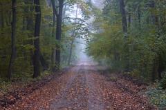 În adâncul pădurii (Dumby) Tags: landscape ilfov românia nature autumn fall forest outdoor colors canoneod40d m42 fujinon55mm