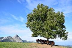 Mugarra (eitb.eus) Tags: eitbcom 35411 g1 tiemponaturaleza tiempon2019 otono bizkaia durango javierlanazuñiga