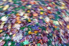 ICM - Autumn Leaves ((Sue Lockhart Images)) Tags: icm intentionalcameramovement autumn leaves red blue yellow green autumnleaves ngysaex