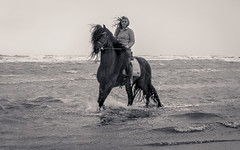 rider on the storm (glasseyes view) Tags: glasseyesview stormy northsea nordsee september2019 woman horse waterside beach