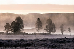 Frosty Morning (Sandra Lipproß) Tags: trees dawn sunrise steam fog river yellowstoneriver yellowstone nationalpark wyoming usa travel outdoor nature landscape frost fall autumn rockymountains silhouette morning cold