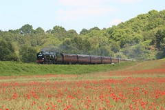 NEARLY SUN (Malvern Firebrand) Tags: sr 462 west country class 34027 taw valley foley park tunnel 3719 svr severn railway railroad train 2019 preserved steam express outdoors scenic scenery countryside rural trees poppies flowers worcestershire vehicles passenger red transport