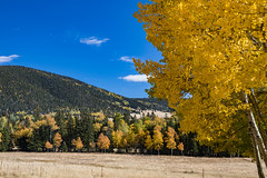 Autumn in the Moreno Valley (webersaustin) Tags: