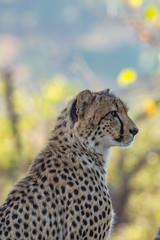 J13 : Du Kruger aux Three Rondavels (Pierre Huat) Tags: afrique du sud afs afriquedusud 2019 voyage j13 kruger krugernp np blyde blyderiver river threerondavels rondavels