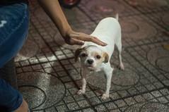 doggy 3 (kuuan) Tags: mf manualfocus penf zuiko penff1440mm 1440mm apsc sonynex5n vietnam saigon night street dog doggy eyes look duck stroking hand