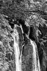 kp2019-37 (Vasily Ledovsky) Tags: sochi krasnaya polyana krasnodar krai voigtlander bessar canon ltm l39 m39 50mm 5018 f18 national park hiking