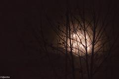 14102019-DSC_0027 (vidjanma) Tags: arbre brume lune