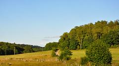 Swedish summer landscape (DameBoudicca) Tags: sweden sverige schweden suecia suède svezia スウェーデン summer sommar sommer verano été estate 夏 skåne