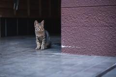 猫 (fumi*23) Tags: ilce7rm3 sony street sel85f18 85mm fe85mmf18 a7r3 animal alley cat chat katze kitten kitty neko emount ねこ 猫 ソニー