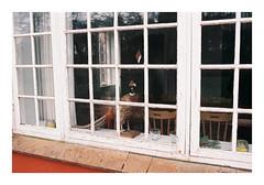 Mossø, Denmark. 2019. (csinnbeck) Tags: analog contax rx fujicolor c200 film 35mm zeiss taxidermy fessant distagon 3528 contaxrx bird window decoration denmark