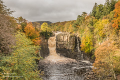 High Force Waterfall Oct 2019 1 (Richard Laidler) Tags: aonb areaofoutstandingnaturalbeauty autumn autumncolour autumncolours autumntints bright countydurham fall forestinteesdale globalgeopark highforce highforcewaterfall landscape longdistance longdistancefootpath northeastengland northpennines northpenninesaonb palesunshine pennine pennineway rivertees teesdale teesdalelandscape upper upperteesdale waterfall waterfalls
