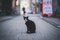 猫 (fumi*23) Tags: ilce7rm3 sony sel85f18 85mm fe85mmf18 emount a7r3 animal alley cat chat bokeh depthoffield dof katze neko gato kitty street ねこ 猫 ソニー