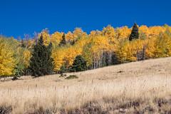 Fall Color (webersaustin) Tags: