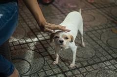 doggy 2 (kuuan) Tags: mf manualfocus penf zuiko penff1440mm 1440mm apsc sonynex5n vietnam saigon night street dog doggy eyes look duck stroking hand