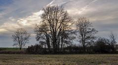 Le petit bosquet (balese13) Tags: 1855mm berry d5000 nikonpassion saintelizaigne yourbestoftoday arbre bosquet campagne centre ciel nikon nuages paysage tree balese 250v10f 1000v40f 1500v60v