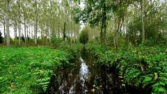 PAYSAGES DE PICARDIE 250 (aittouarsalain) Tags: picardie campagne foret arbre rivière