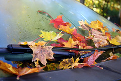 steamy (Ralaphotography) Tags: leaves fall autumn october red season photography canon nature change yellow car steam steamy window morning