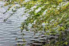 Lobelia lake (outdoorstudio) Tags: ©jetteoutdoorstudiodk ©jettewfrederiksen skov forest ©outdoorstudiodk svampetur fall efterår sø lake autumn