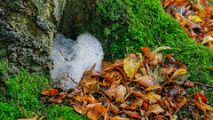 Piles Copppice 8th October 2019 (boddle (Steve Hart)) Tags: stevestevenhartcoventryunitedkingdomcanon5d4 piles copppice 8th october 2019 steve hart boddle steven bruce wyke road wyken coventry united kingdon england great britain canon 5d mk4 2470mm standard wild wilds wildlife life nature natural bird birds flowers flower fungii fungus insect insects spiders butterfly moth butterflies moths creepy crawley winter spring summer autumn seasons sunset weather sun sky cloud clouds panoramic landscape fungi
