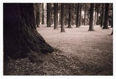 Park (Robert Drozda) Tags: portland oregon park tree grass trunk monochrome film ilfordhp5 olympusxa2 bluemooncamera drozda