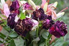 DSC_1346 (griecocathy) Tags: macro fleurs rose lys feuille boutons bouquet violet marron vert jaune blanc crème oranger