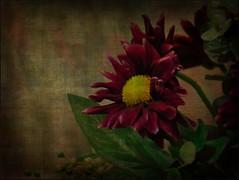 Flower Art (novice09) Tags: flowers textures artistic ipiccy digitalartpainting painterly