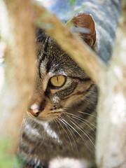 Kitty (aw_photos) Tags: cat catphotography animalphotography animalphoto animals animal kitty olympus olympusomd olympuscamera olympusomdem10ii olympusomdem10 olympusomdem10mark2 getolympus mirrorlessphotography mirrorless mirrorlesscamera texas cuteanimal cute cuteanimals cutecat prettykitty cutekitty greycat greykitty