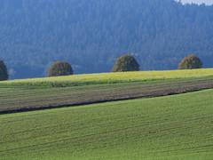 Lindauer Moor 151019-34 (martinritter1) Tags: lindauer moor herbst