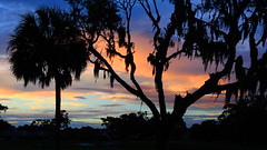 June 16th Sunset (Jim Mullhaupt) Tags: sunset sundown dusk sun evening endofday sky clouds color red gold orange pink yellow blue tree palm outdoor silhouette weather tropical exotic wallpaper landscape nikon coolpix p900 jimmullhaupt manateecounty bradenton florida cloudsstormssunsetssunrises photo flickr geographic picture pictures camera snapshot photography nikoncoolpixp900 nikonp900 coolpixp900