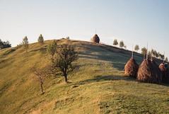 inclined tree (vldd) Tags: tree hill analog yashica yashicaelectro35gx kodakgold200 40mm rural romania landscape mountains