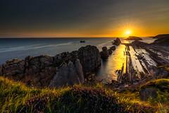 Arnia (Luis JG) Tags: arnia cantabria liencres amanecer sunrise sunset paisaje landscape roca rock sol cielo sky sun nubes clouds arbustos bush flores flowersmarsea horizontehorizon canon5div naturaleza nature