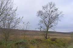 FadingLight (Tony Tooth) Tags: nikon d600 nikkor 50mm f18g roadside moors moorland tree warslow staffordshiremoorlands staffs october fadinglight